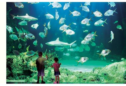 Адреса для любителей подводного мира и рыб